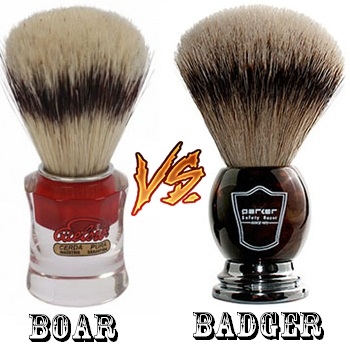 Boar vs badger