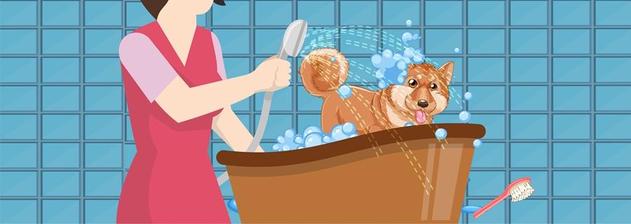 Step 10- Bathe Your Dog