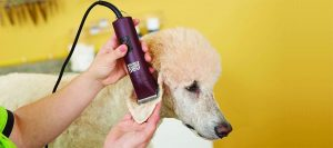 5 Best Andis Dog Clippers to Buy in 2020