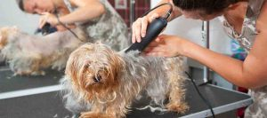 Best Dog Clippers for Thick Coats & Matted Hair: Your Complete And Handy Guide
