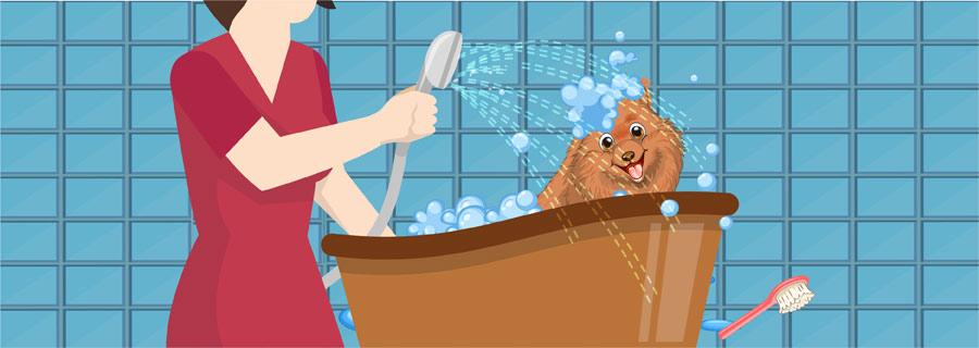 Step 3- Bathe Your Dog