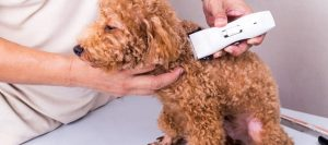 Best Dog Clippers For Poodles: A Complete Guide To Poodle Grooming