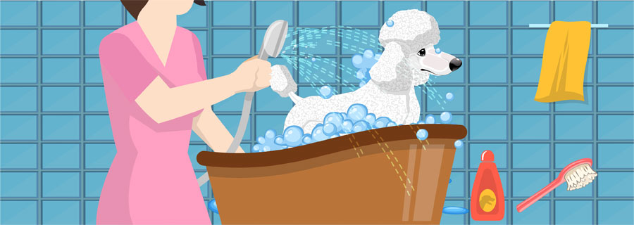 Step 4- Bathe And Brush Your Poodle