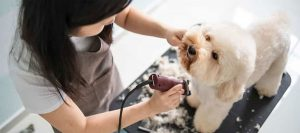 Best Dog Clippers For Maltese: Quick And Easy Grooming